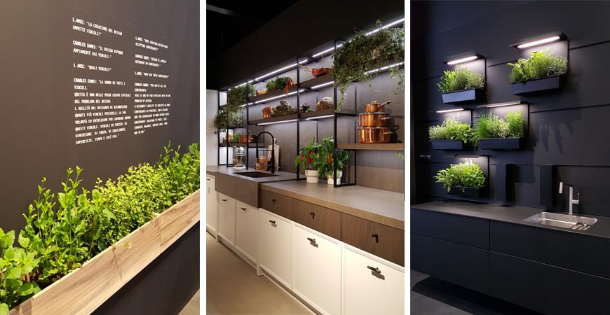 viherkasvit keittiössä